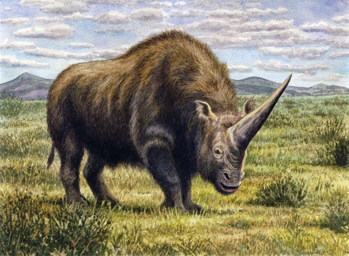 Elasmotherium - огромный волосатый единорог, который обитал на Земле 29 000 лет назад 7
