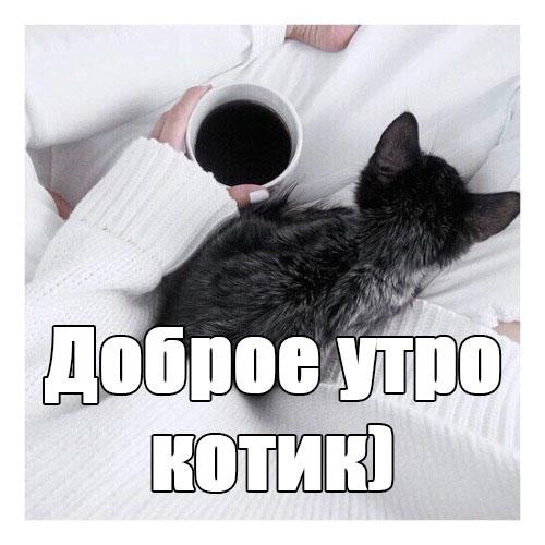 Доброе утро котик - самые красивые и приятные открытки, картинки 2