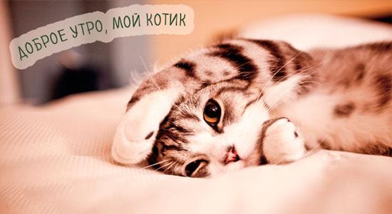Доброе утро котик - самые красивые и приятные открытки, картинки 6