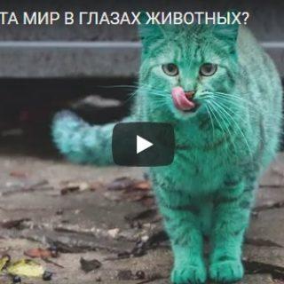 Какого цвета мир в глазах животных, как они его видят - интересное видео