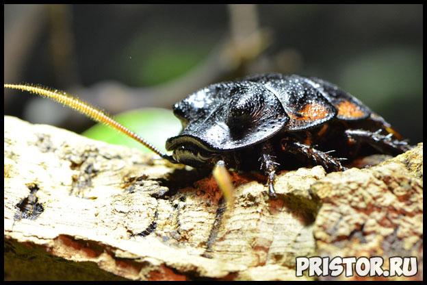 Как избавиться от тараканов навсегда в квартире - лучшие способы 1