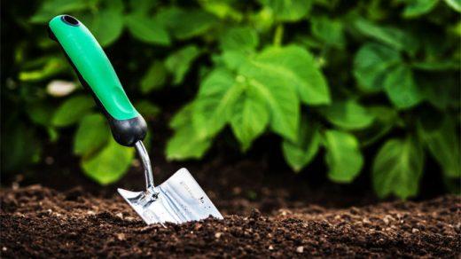 Как снизить кислотность почвы на огороде - несколько рекомендаций 2