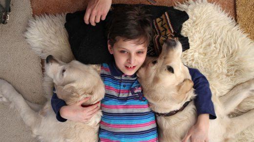Канистерапия - реабилитация с помощью собак, противопоказания 1