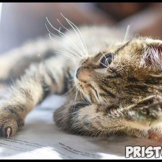 Кожный зуд у кошек - основные причины, что делать в данном случае 3