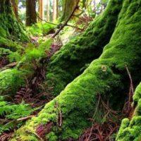 Красивые и прикольные картинки, фото природы на заставку телефона 13