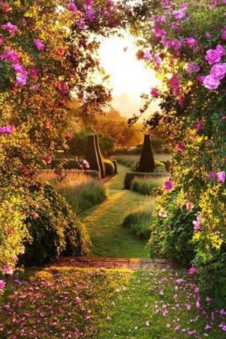 Красивые и прикольные картинки, фото природы на заставку телефона 6