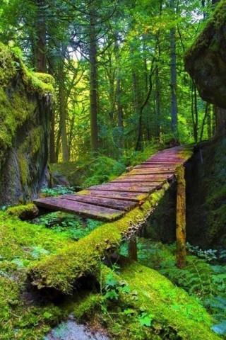 Красивые и прикольные картинки, фото природы на заставку телефона 8