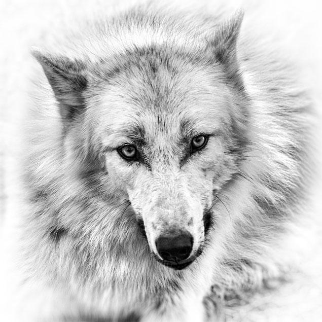 Красивые и прикольные нарисованные картинки животных - лучшая подборка 1