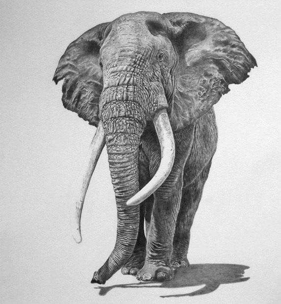 Красивые и прикольные нарисованные картинки животных - лучшая подборка 10