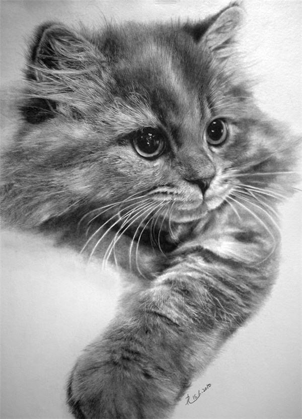 Красивые и прикольные нарисованные картинки животных - лучшая подборка 15