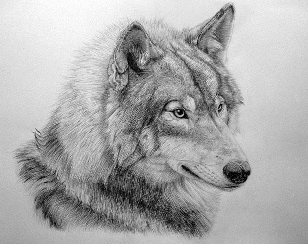 Красивые и прикольные нарисованные картинки животных - лучшая подборка 19