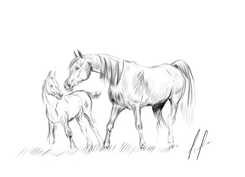 Красивые и прикольные нарисованные картинки животных - лучшая подборка 4