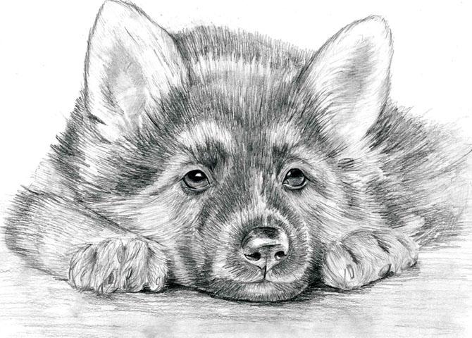 Красивые и прикольные нарисованные картинки животных - лучшая подборка 6