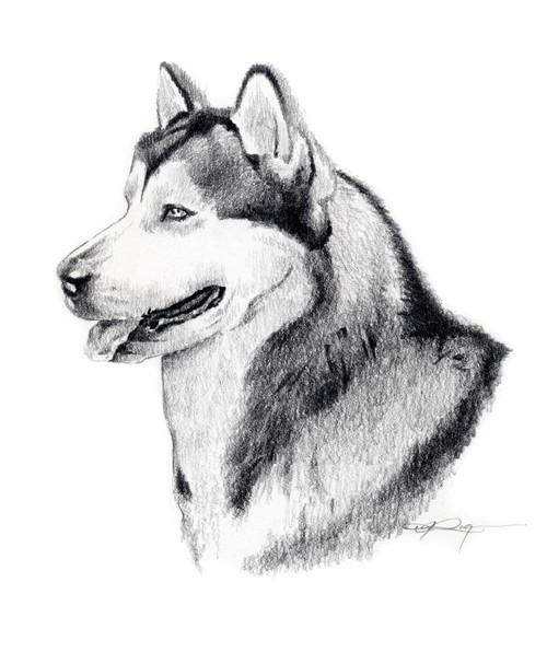 Красивые и прикольные нарисованные картинки животных - лучшая подборка 8