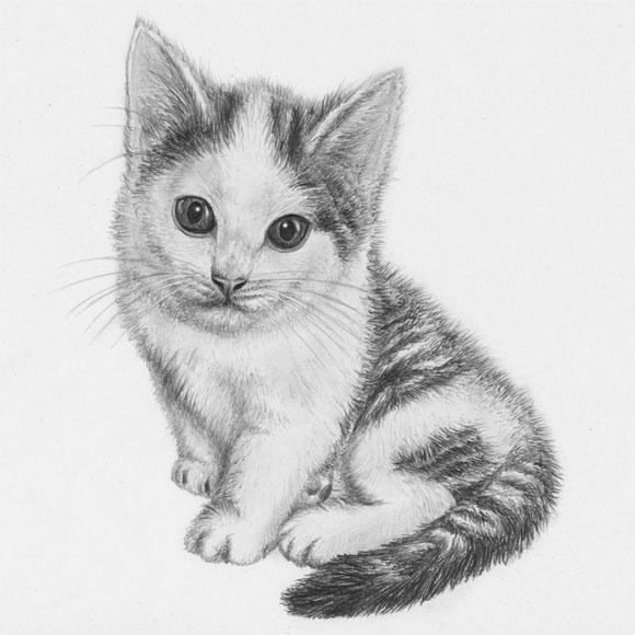 Красивые и прикольные нарисованные картинки животных - лучшая подборка 9
