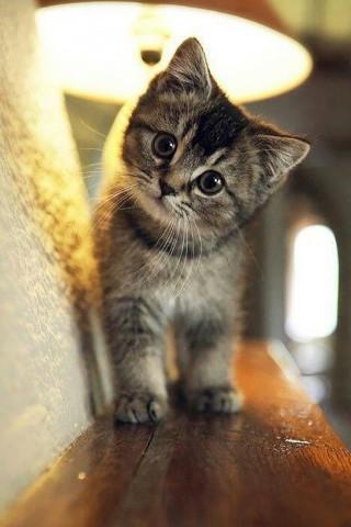 Красивые картинки домашних животных на заставку телефона - подборка 10