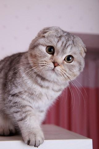 Красивые картинки домашних животных на заставку телефона - подборка 14