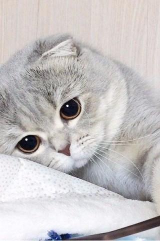 Красивые картинки домашних животных на заставку телефона - подборка 17
