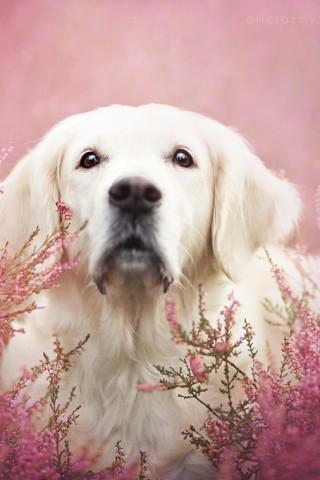 Красивые картинки домашних животных на заставку телефона - подборка 19