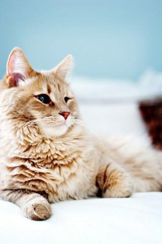 Красивые картинки домашних животных на заставку телефона - подборка 21