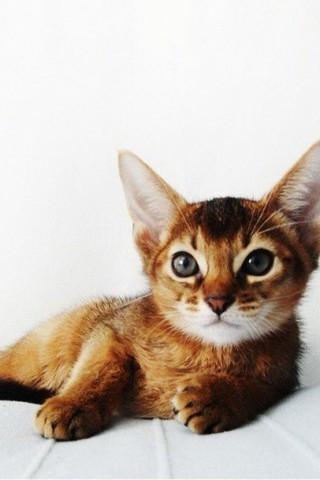 Красивые картинки домашних животных на заставку телефона - подборка 22