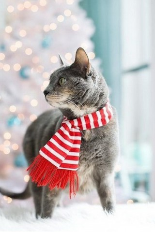 Красивые картинки домашних животных на заставку телефона - подборка 24