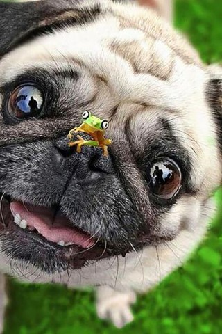 Красивые картинки домашних животных на заставку телефона - подборка 5