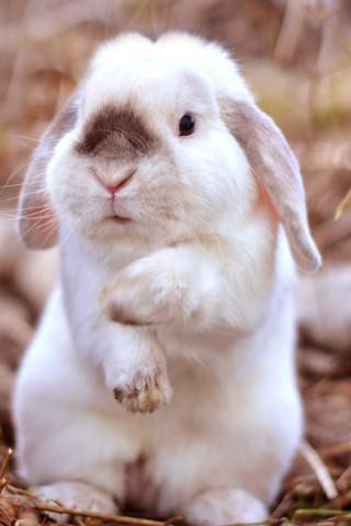 Красивые картинки домашних животных на заставку телефона - подборка 9