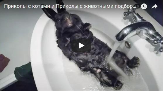 Лучшие смешные и веселые видео приколы до слез - коллекция №69