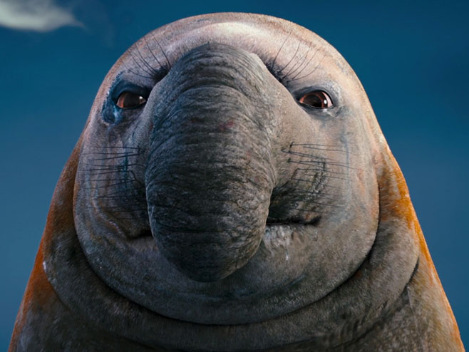 Морские слоны фотографии (лат. Mirounga) - самые красивые картинки 6