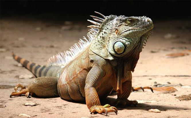 Необычные домашние животные - самые интересные и удивительные 3