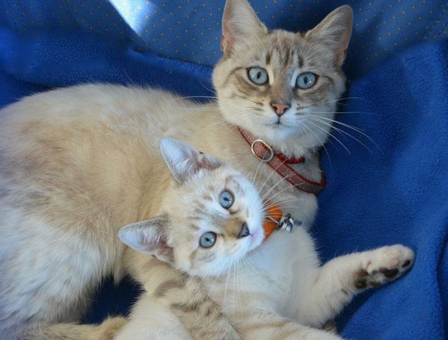 Самые милые и прикольные картинки котят и щенят - лучшая подборка 11
