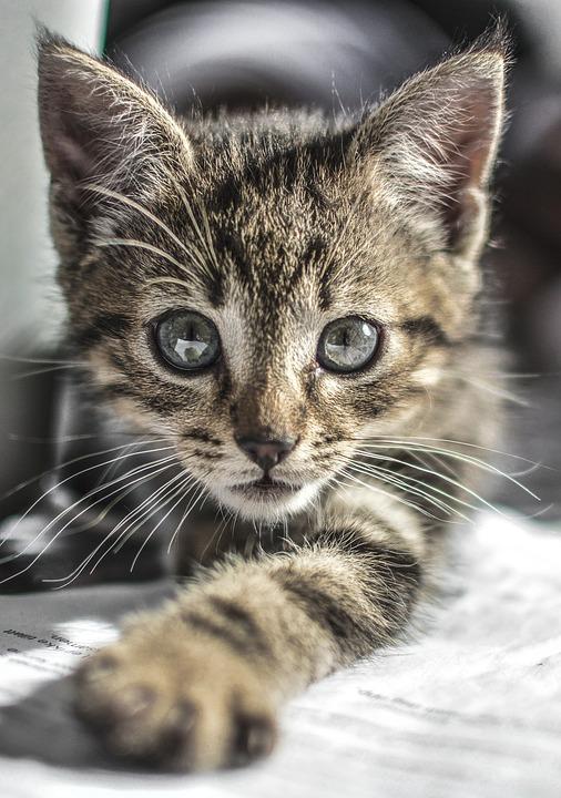 Самые милые и прикольные картинки котят и щенят - лучшая подборка 12