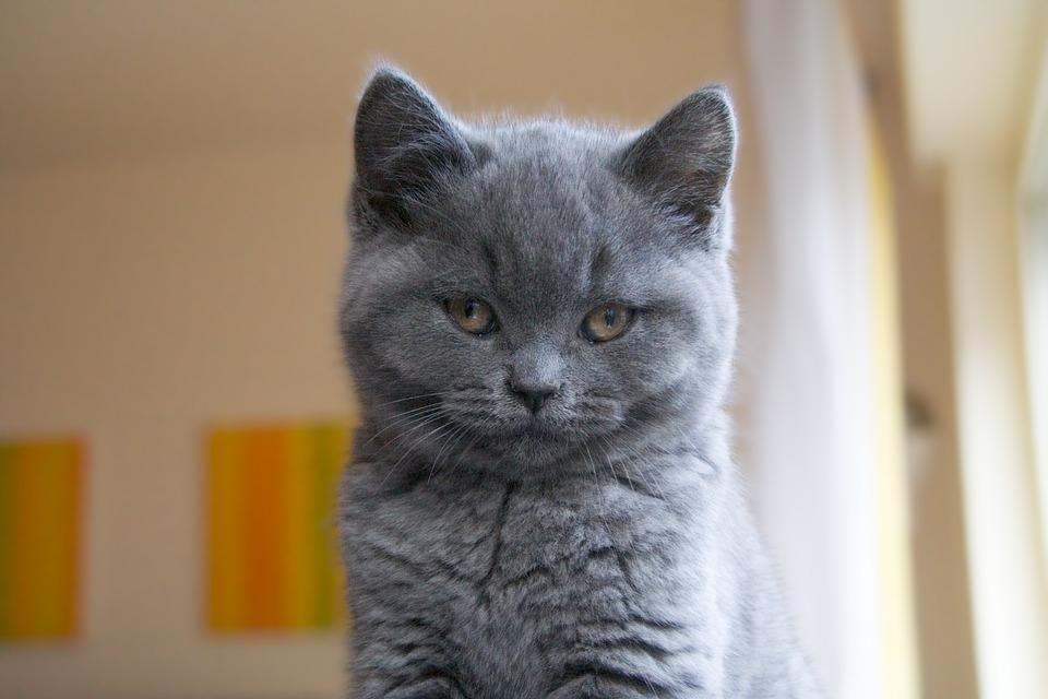 Самые милые и прикольные картинки котят и щенят - лучшая подборка 13