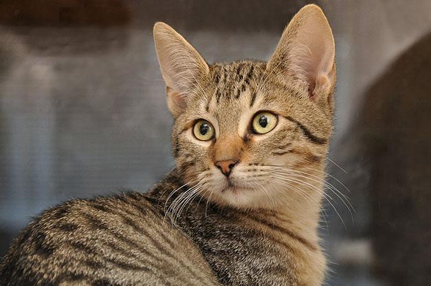 Самые милые и прикольные картинки котят и щенят - лучшая подборка 19