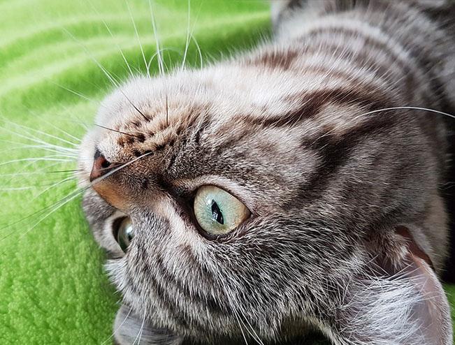Самые милые и прикольные картинки котят и щенят - лучшая подборка 2