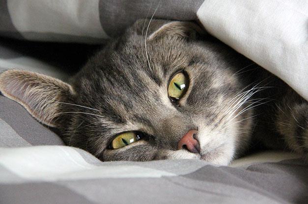 Самые милые и прикольные картинки котят и щенят - лучшая подборка 22