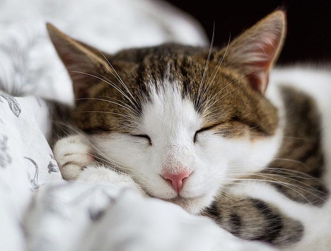 Самые милые и прикольные картинки котят и щенят - лучшая подборка 28