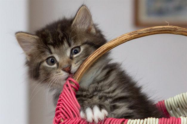 Самые милые и прикольные картинки котят и щенят - лучшая подборка 4