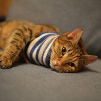 Самые милые и прикольные картинки котят и щенят - лучшая подборка 9