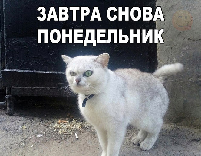 Смешные коты и кошки - самые прикольные и веселые картинки, фото №39 1