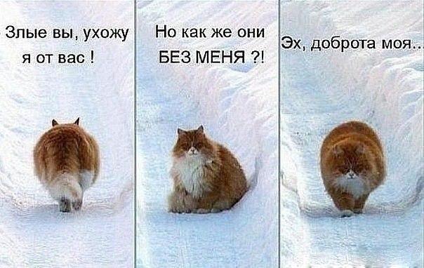 Смешные коты и кошки - самые прикольные и веселые картинки, фото №39 14