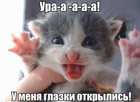 Смешные коты и кошки - самые прикольные и веселые картинки, фото №39 16