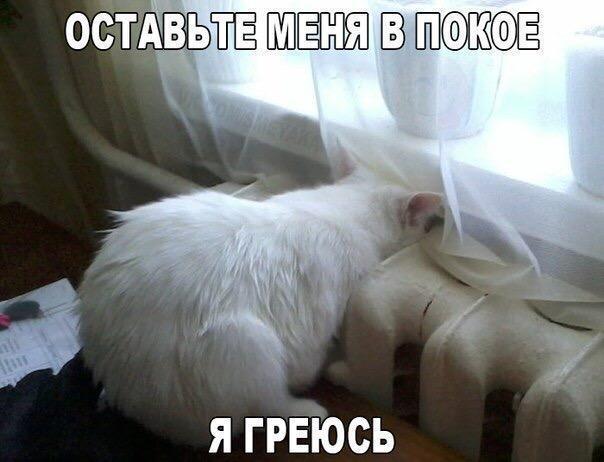 Смешные коты и кошки - самые прикольные и веселые картинки, фото №39 18