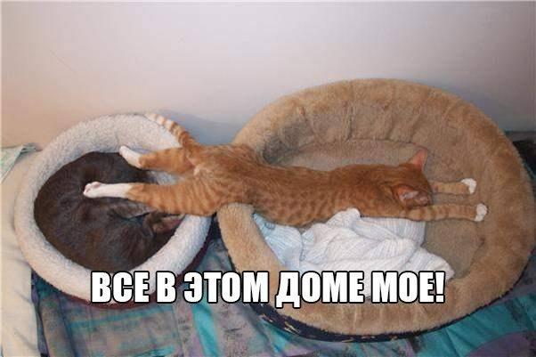 Смешные коты и кошки - самые прикольные и веселые картинки, фото №39 22
