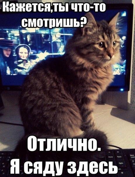 Смешные коты и кошки - самые прикольные и веселые картинки, фото №39 26