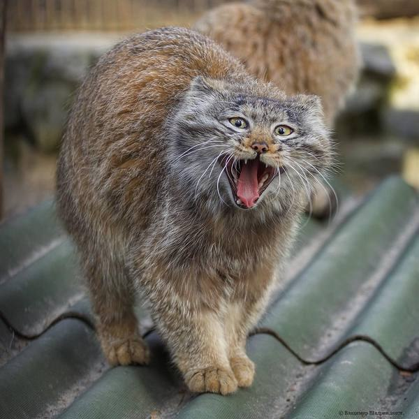 Смешные коты и кошки - самые прикольные и веселые картинки, фото №39 28