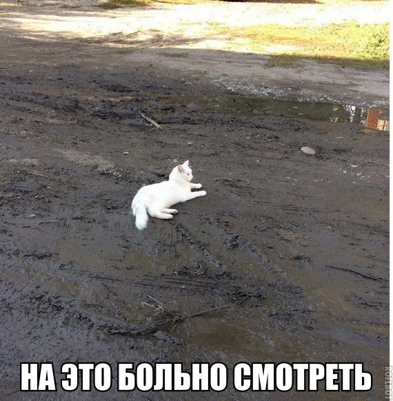 Смешные коты и кошки - самые прикольные и веселые картинки, фото №39 3