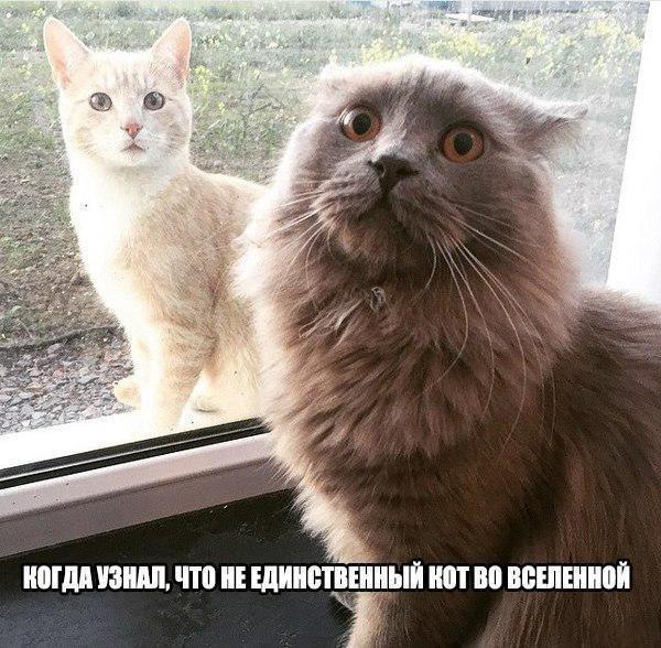 Смешные коты и кошки - самые прикольные и веселые картинки, фото №39 32