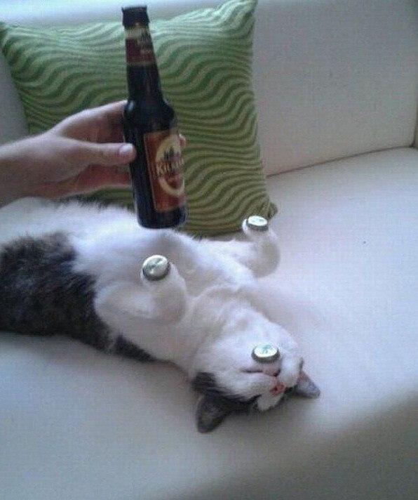 Смешные коты и кошки - самые прикольные и веселые картинки, фото №39 36